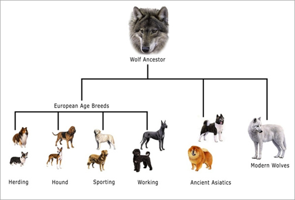 How Wolves Turned Into Dogs