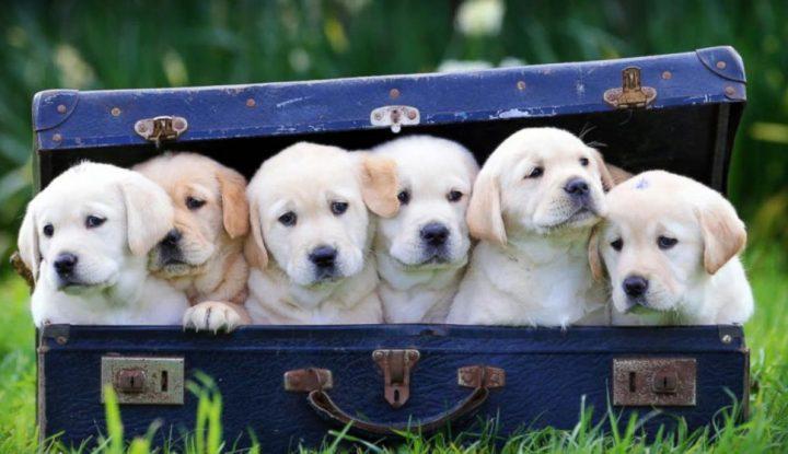 The Original Dogs