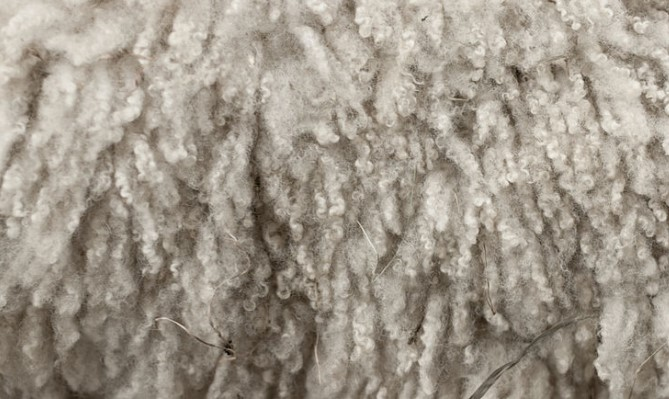 The Process Of Producing Cotton And Wool
