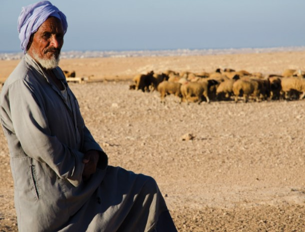 Bedouin Goats And Shepherders