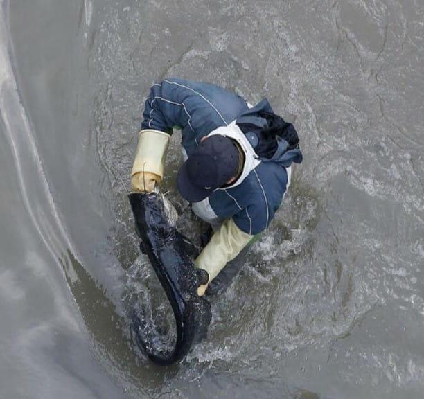 Carpes Et Truites Vivantes Trouvees Dans Le Canal